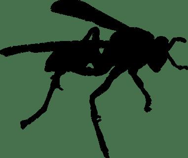 wasp-po